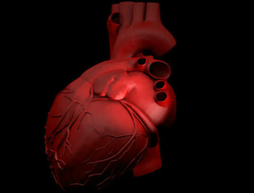 cuore in 3d