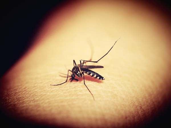 zanzara della malaria