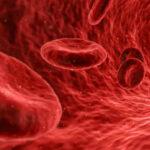 Globuli rossi